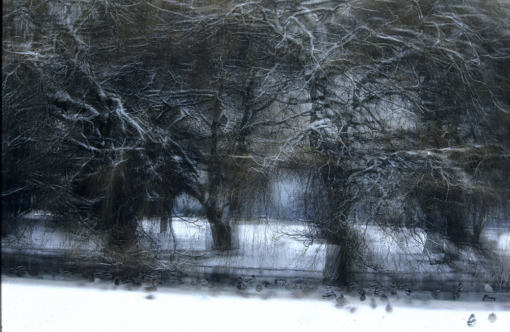 Winter movements on the ice in the water and by the trees. Multi layers of transparency film creates movement.
