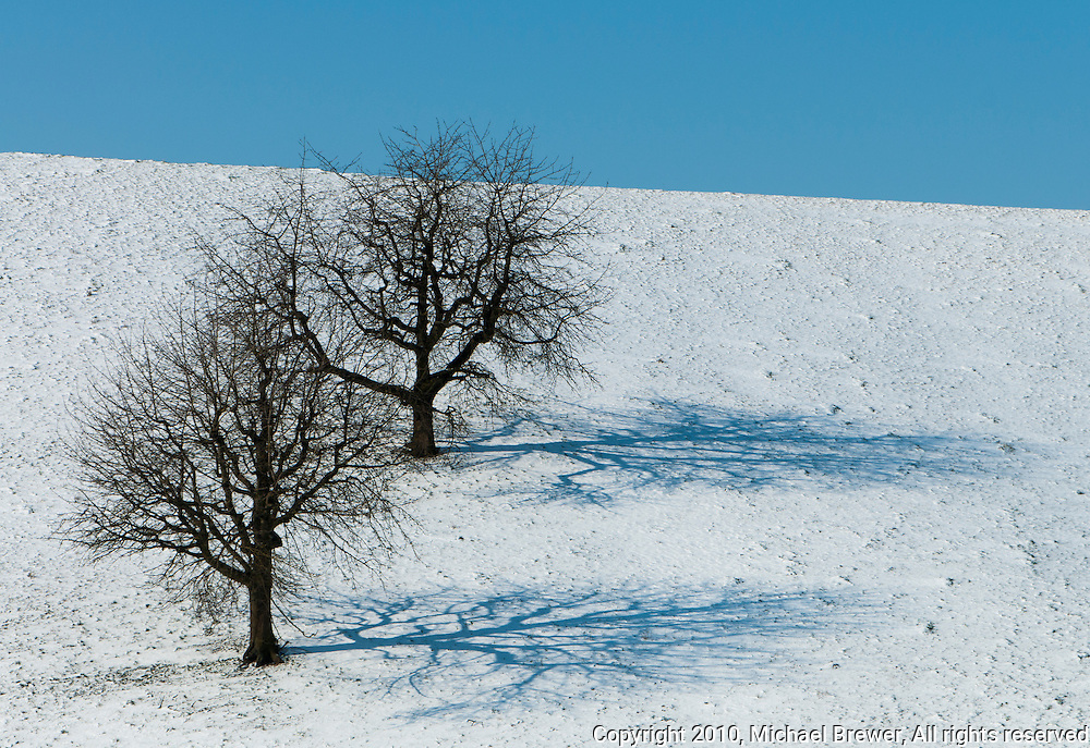 Two bare fruit trees and their shadows on a field of snow againts a blue sky in Switzerland.