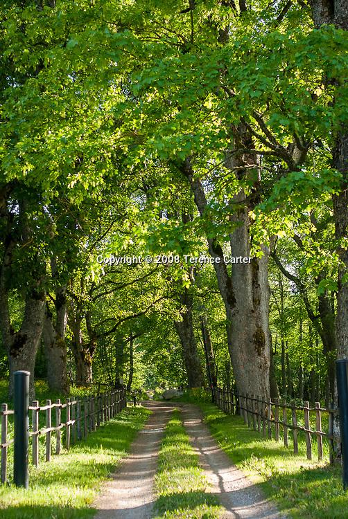 Camigliatello Silano canopy of trees.