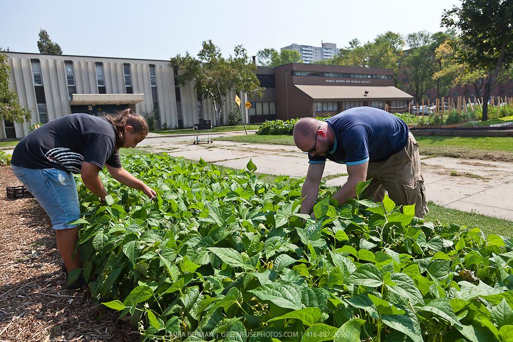 FoodShare's market garden project at Bendale School.