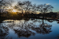 Acacia trees stand reflected in a waterhole at dawn as the sun rises over the horizon, Rooipoort Nature Reserve, Northern Cape, South Africa