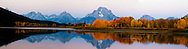"""Autumn Sunrise at Oxbow Bend in Grand Teton National Park. A rose colored sky accents the yellow aspen along the banks of the Snake River that hosts a reflection of the Grand Teton Mountains above.<br /> <br /> For production prints or stock photos click the Purchase Print/License Photo Button in upper Right; for Fine Art """"Custom Prints"""" contact Daryl - 208-709-3250 or dh@greater-yellowstone.com"""