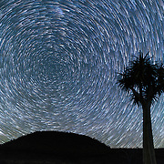 Comet star trails over quiver tree, Nieuwoudtville, South Africa.