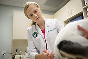 Veterinary Photography by Healthcare Photographer Thomas Winter