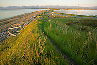 Tall grass and trail along the bluffs lead down to the popular sandy beach known as Goose Spit, a popular destination in Comox.  Comox Valley, Vancouver Island, British Columbia, Canada.