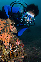 Diver observing a pair of harlequin shrimps eating a starfish, Seraya, Bali, Indonesia. Seraya is located on Bali's NE coast and has become very popular with divers and photographers searching for unusual species.  The signature site, 'Seraya Secrets' has a barren sand floor with small patches of sponge and other encrusting life, and rocks in the shallows. Bali is a very popular holiday destination for divers and offers a wide variety of different types of diving, from reefs and wrecks to mucks sites such as Puri Jati and Gilimanuk.