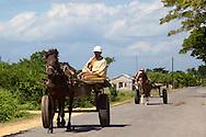 Horses and carts in Pinar del Rio, Cuba.