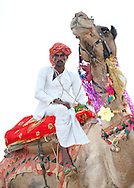 Portrait of Indian bedouin man riding his camel.