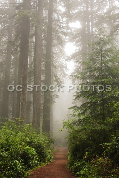 Lady Bird Johnson Grove Trail in Fog