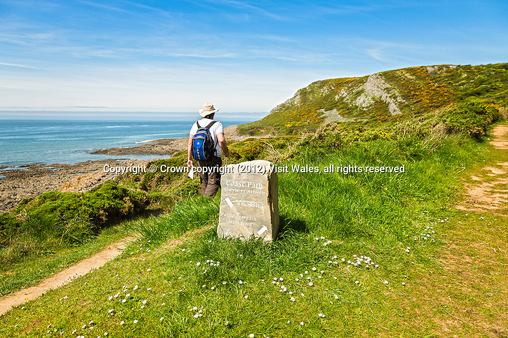 Male walker on Coast Path near Port Eynon <br /> Gower Peninsula<br /> Swansea County<br /> South<br /> Walking<br /> Activities and Sports
