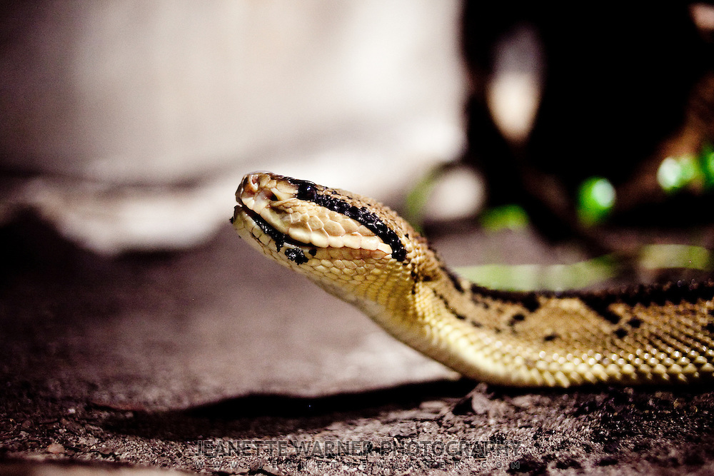 how to get over fear of snakes