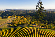 Aerial view over Fairsing Vineyard, Yamhill-Carlton AVA, Willamette Valley, Oregon