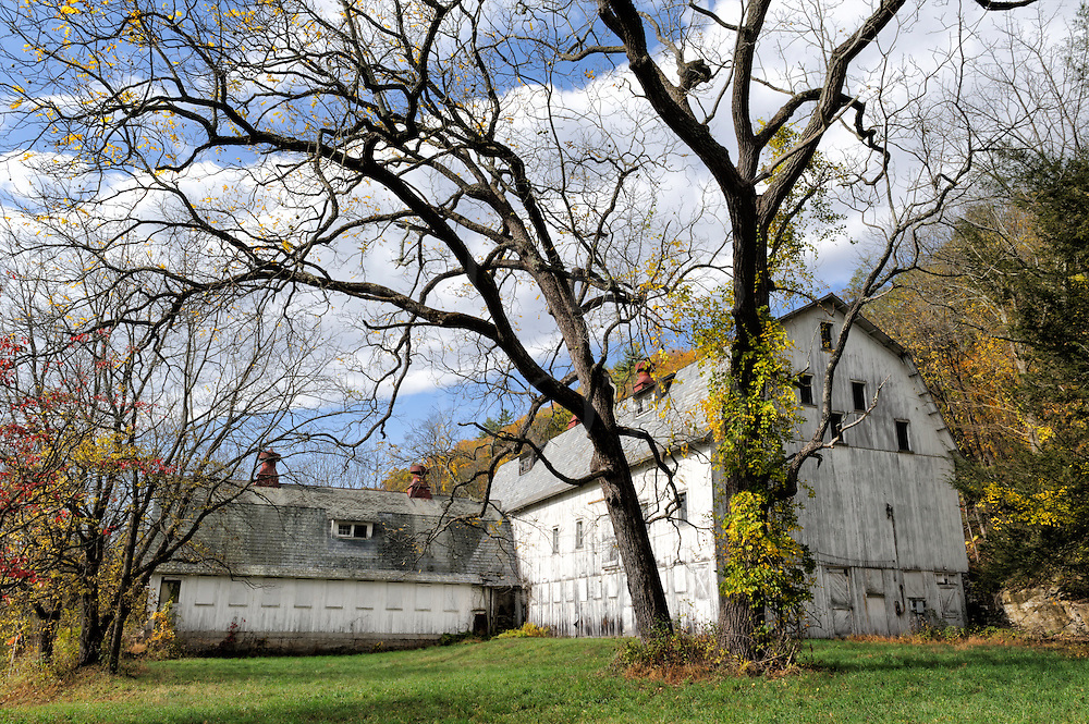 White barn and large black walnut tree in sunny autumn countryside in Pennsylvania. This is an old abandoned farm in the scenic Delaware Water Gap on the border with New Jersey.