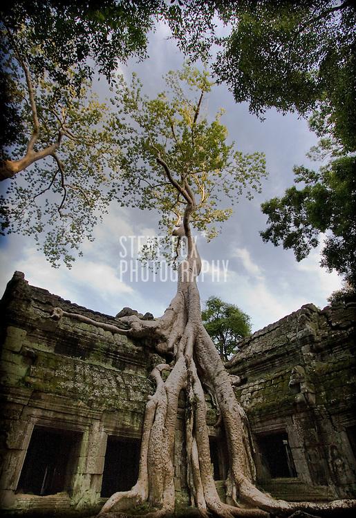 Ta Phrom engulfed by a tree, Siem Reap, Cambodia
