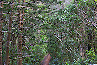 Walking track in Norfolk Island National Park, Norfolk Island, Australia