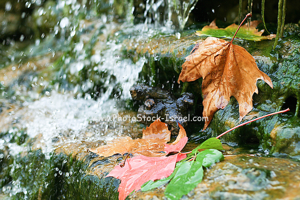 Fall leaves floating in a water stream