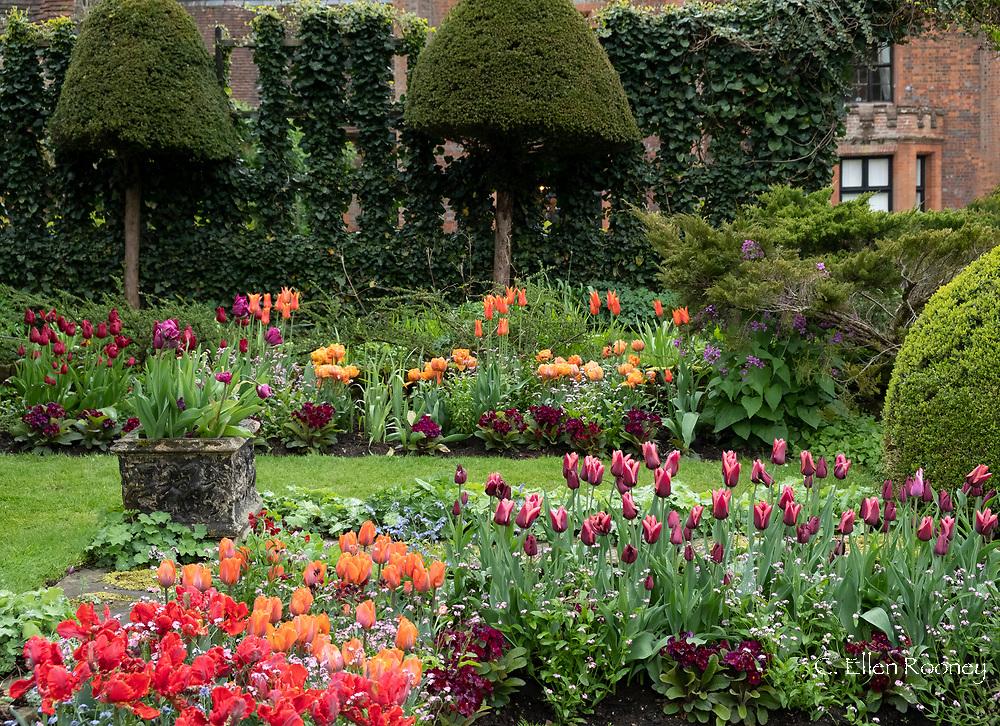 Tulipa 'Rococo', Tulipa 'Annie Schilder' and Tulipa 'Slawa' in the Sunken Garden at Chenies Manor Gardens, Rickmansworth, Buckinghamshire, UK, April