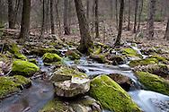 Rothrock Spring Steams