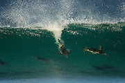Mit bis zu 30 km/h bewegt sich der Eselspinguin (Pygoscelis papua) als schnellster Schwimmer unter den Pinguinen im Wasser fort. In der Brandungszone nutzt er, wie ein Wellenreiter, zusätzlich geschickt den Schub der heranrollenden Brecher. | With a swim speed of up to 30 km/h the Gentoo Penguin (Pygoscelis papua) is the fastes among the penguins. In the surf line the penguin additionally uses the thrust of the braking waves.