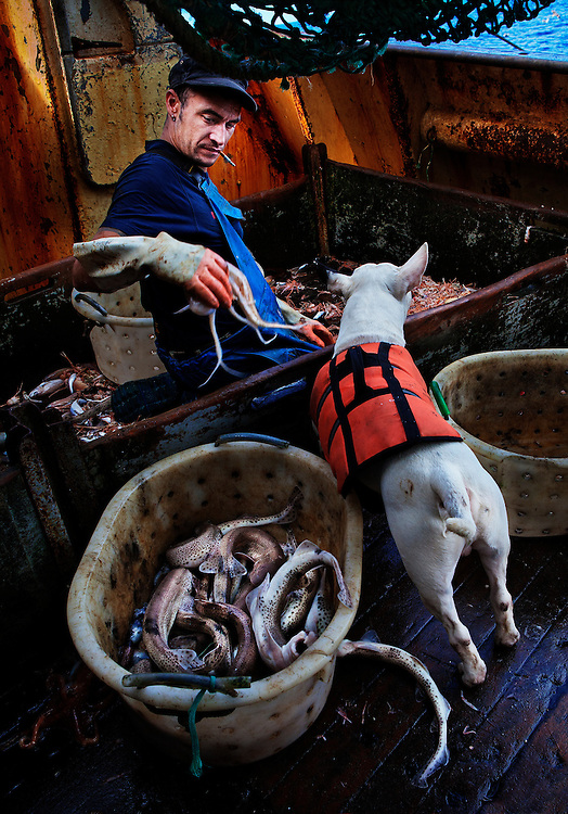 Carl and his dog, Keta, at sea aboard the trawler 'Risten', whose home port is Le Guilvinec, France.  <br /> <br /> The boat is mainly fishing for Nephrops (Langoustine), but has a smaller by-catch of other species.<br /> <br /> Most of the time Keta displayed a lack of interest in the fish, but kept a keen lookout for any conga eels.  <br /> <br /> Whenever one was landed he would chase it around the deck relentlessly until it could be placed out of his reach.
