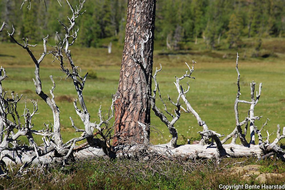 Roltdalen nasjonalpark. Foto: Bente Haarstad