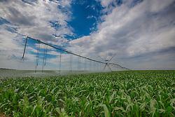 Lavoura de milho sob pivô de irrigação na zona rural de Perdizes, Minas Gerais. FOTO: Jefferson Bernardes/Agência Preview