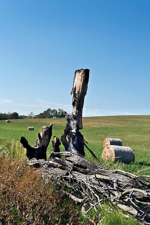 burned down tree trunks in agricultural landscape France Aude