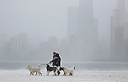 Dogwalker Klaus Loibner leads his charges on a chilly stroll next to Lake Michigan as snow falls at North Avenue Beach on Friday, Feb. 10, 2012.