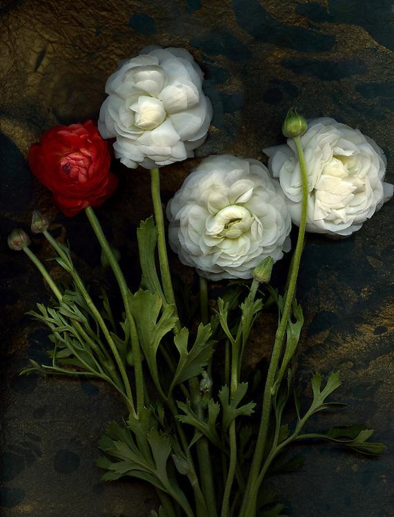 Ranunculus bouquet #2 / #VAR230