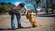 When the dogs are far enough along, they work on general good manners training.  Here Jose is handling the pup's paw.  They also play with the dogs' ears and look in their mouths to get them used to experiences that they might encounter in a home or at the vet's office.
