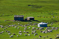 Mongolie, Province de Ovorkhangai, Vallee de l'Orkhon, campement nomade // Mongolia, Ovorkhangai province, Orkhon valley, Nomad camp, yurt