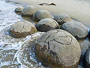 South Pacific Ocean waves released the spherical Moeraki Boulders onto Koekohe Beach, between Moeraki and Hampden on the Otago coast, South Island, New Zealand. These ancient concretions grew up to 2 meters (6 feet) in diameter over 4 to 5.5 million years from marine mud (Moeraki Formation mudstone) near the surface of the Paleocene sea floor.  After the concretions formed, large cracks (septaria) formed and filled with brown calcite, yellow calcite, and small amounts of dolomite and quartz when a drop in sea level allowed fresh groundwater to flow through the enclosing mudstone.