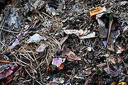 Trash discarded into the mangroves by tourists on Gosaba island, Sundarban, West Bengal, India, on 18th January, 2012. The trash prevent the mangrove seeds from growing thus allowing the island soil to slip away into the sea. The Sundarban islands and mangroves are sinking, say experts, due to climate change. Locals say they are overwhelmed by tourists' trash that affect the mangroves and sudden changes in weather patterns that have caused such damage that they continue to struggle to recover. One of the islands, once inhabited, has slowly sunk. Photo by Suzanne Lee for The National (online byline: Photo by Szu for The National)
