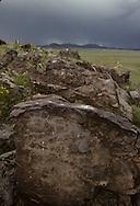 Mongolia. petroglyphs in Tamir sum  Bayantsagaan Valley       / Pétroglyphe stylisé au cervidé. (Age du Bronze). / La forme allongée de ce cerf et sa position rappellent le style des monolythes à cervidés. Son dessin différe nettement des autres représentations pétroglyphiques de cet animal. Peut-être faut-il voir ici une référence directe ou indirecte à l'origine mythologique des peuples proto-turcs et proto-mongols qui voyaient en la biche maral l'ancêtre fondateur de leurs tribus. (A QURUU UZUUR, au confluent de la IK TAMIR et de la BAYANSTAGAAN, Sum de IK TAMIR dans l'aymag de ARQANGAY  / /18    L920725a  /  P0002623