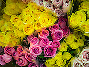 30 JUNE 2016 - BANGKOK, THAILAND:  Roses for sale from a sidewalk stall at Pak Khlong Talat. Sidewalk vendors around Pak Khlong Talat, Bangkok's famous flower market, face eviction if they reopen on July 1. As a part of the military government sponsored initiative to clean up Bangkok, city officials have been trying to shut down the sidewalk vendors around the flower market. The vendors were supposed to be gone by the end of March, but city officials relented at the last minute with a compromise allowing vendors to stay until June 30. When vendors dismantled their booths after business on June 30, they weren't sure if they will be allowed to reopen July 1. Some vendors have moved to new locations approved by the government but many have not because they can't afford the higher rents in the new locations.    PHOTO BY JACK KURTZ