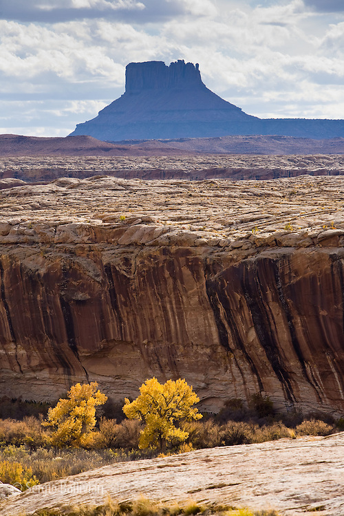 Anderson Bottom area during the peak of Autumn colors as seen from the White Rim Trail in Canyonlands National Park, Utah.