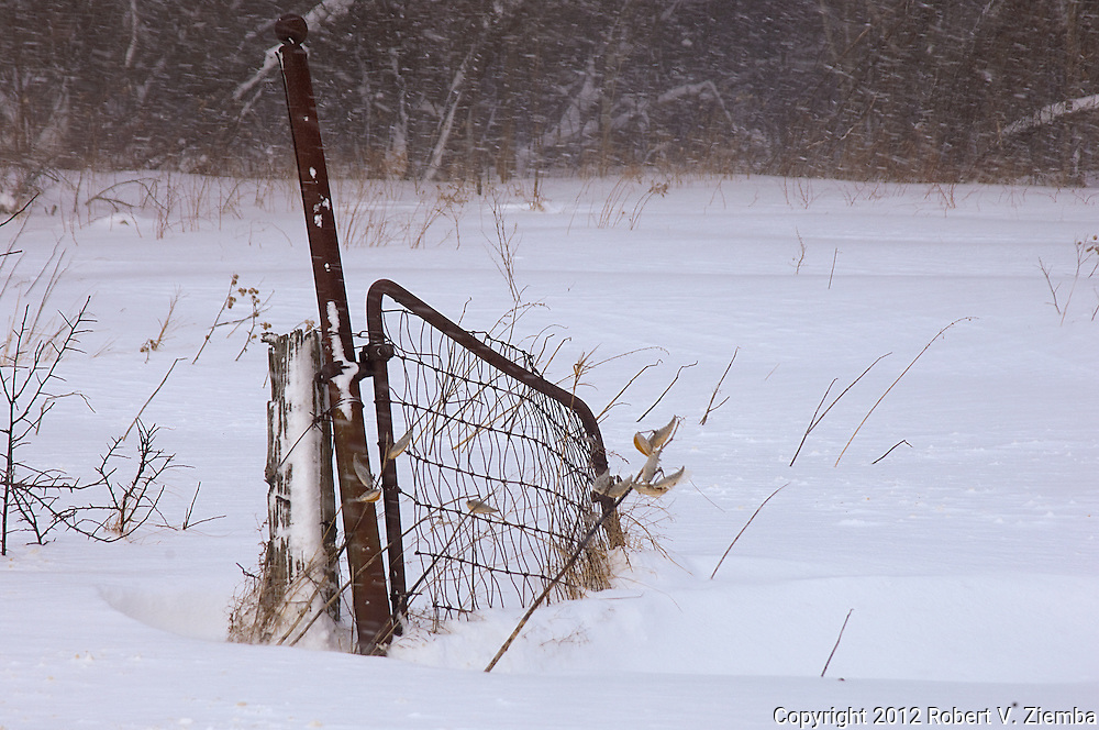 """""""Welcome""""-An image of an old field gate left open in over grown pasture."""