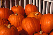 Image of pumpkins in Stowe, Vermont, American Northeast