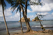 Caribbean's 2013