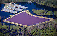 Swine factories with animal confinement buildings under water next to the Neuse River. The lagoon at this factory was not overtopped with flood water.