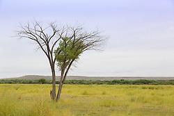 lone tree in Basque del Apache Wildlife