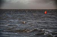 SCHIERMONNIKOOG - Waddenzee tussen Lauwersoog en Schiermonnikoog.  COPYRIGHT KOEN SUYK