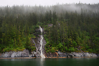 Waterfall & Foggy Forest, Tracy Arm Fjord