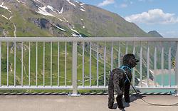 THEMENBILD - ein schwarzer Hund auf der Mooserboden Staumauer, im Hintergrund der Stausee Wasserfallboden und die Fürthermoar Alm, aufgenommen am 15. Juni 2017, Kaprun, Österreich // a black dog on the Mooserboden dam, in the background the dam Wasserfallboden and Fürthermoar Alm on 2017/06/15, Kaprun, Austria. EXPA Pictures © 2017, PhotoCredit: EXPA/ Stefanie Oberhauser