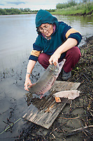 Vera Spein cuts up salmon with an ulu along the Kwethluk River, a tributary of the Kuskokwim approximately 15 miles east of Bethel, near the Yup'ik Eskimo village of Kwethluk, Alaska. Dried, smoked, and fresh salmon are staples of the subsistence lifestyle.