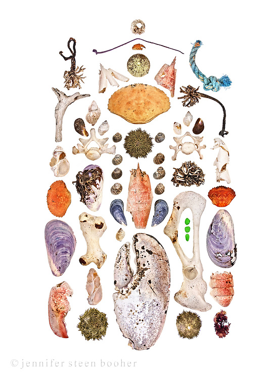 Top to bottom, left to right:<br /> Row 1: kelp holdfast, driftwood, Waved Whelk (Buccinum undatum), Jonah Crab (Cancer borealis), Horse Mussel (Modiolus modiolus), lobster claw (Homarus americanus)<br /> Row 2: Lobster head, Waved Whelk, juvenile horse mussel, Dog Whelk (Nucella lapillus), seal vertebra [probably Harbor Seal (Phoca vitulinaI but possibly Gray Seal (Halichoerus grypus)], Horse Mussel, seal humerus [as before], Waved Whelk, Green Sea Urchin (Strongylocentrotus drobachiensis)<br /> Row 3: Northern Rock Barnacle (Semibalanus balanoides), plastic cable tie, crab claw, sea urchin, Rock Crab (Cancer irroratus) , 2 rows of Common Periwinkle (Littorina littorea), sea urchin, lobster, 2 Blue Mussel (Mytilus edulis), Dog Whelk, lobster claw<br /> Row 4: lobster trap rope, kelp holdfast, 2 dog whelks, juvenile horse mussel, seal vertebra, kelp holdfast, seal pelvic bone, sea glass, sea urchin<br /> Row 5: lobster leg segment, Green Crab (Carcinus maenas), Horse Mussel, lobster tail segment, Irish Moss (Chondrus crispus)