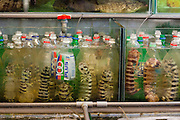 Mantis shrimp (also called mantis prawn) kept in 100 plus drinks bottles to stop them fighting with each other