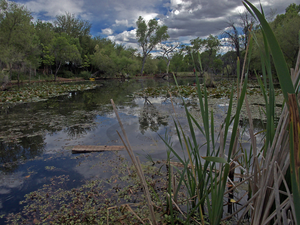 An irrigation pond looking with reflections of the clouds and cottonwood trees.