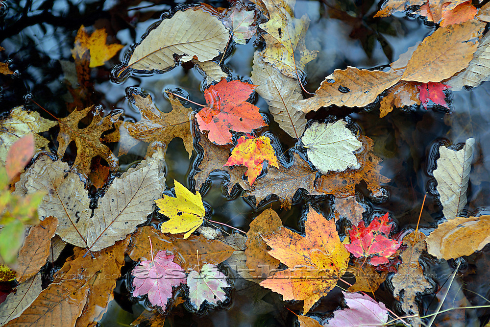 Leaves on water.
