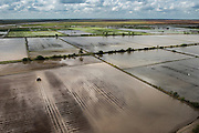Rice production<br /> East Demerara conservancy<br /> GUYANA<br /> South America